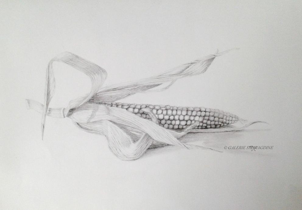 L'épi de maïs033