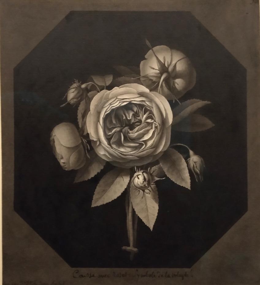 08Caisse de roses