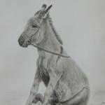 dessin, âne