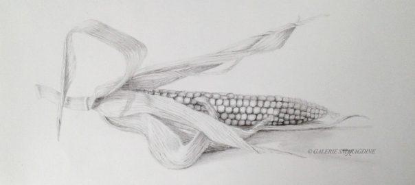 graphite,épi, maïs,dessin