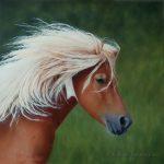 portrait équin, portrait animalier, poney Shetland,peinture à l'huile